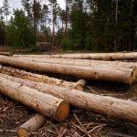 Відкритий продаж деревини на електронних аукціонах