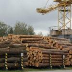 Оптимальні торги деревиною